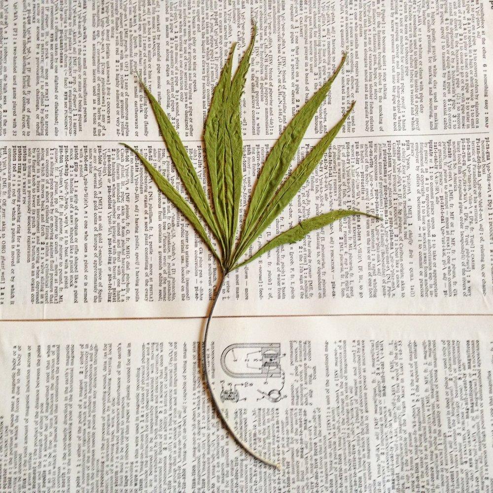 Sativa.jpg