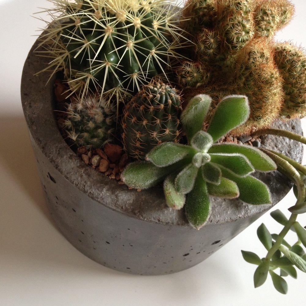 CactiGarden_concrete.JPG