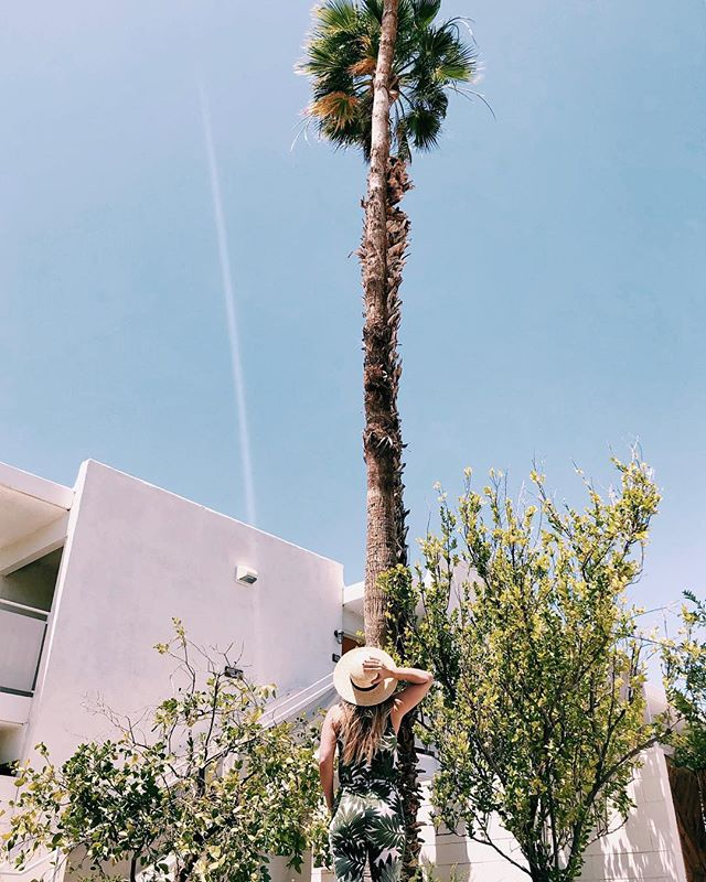 Here's a picture of me looking up at a v tall palm tree. It's representative of the anxiety I currently feel about not having started my book revisions. Pls send help, good vibes, motivation, wine, love, chocolate, rain, or ANYTHING AT ALL.