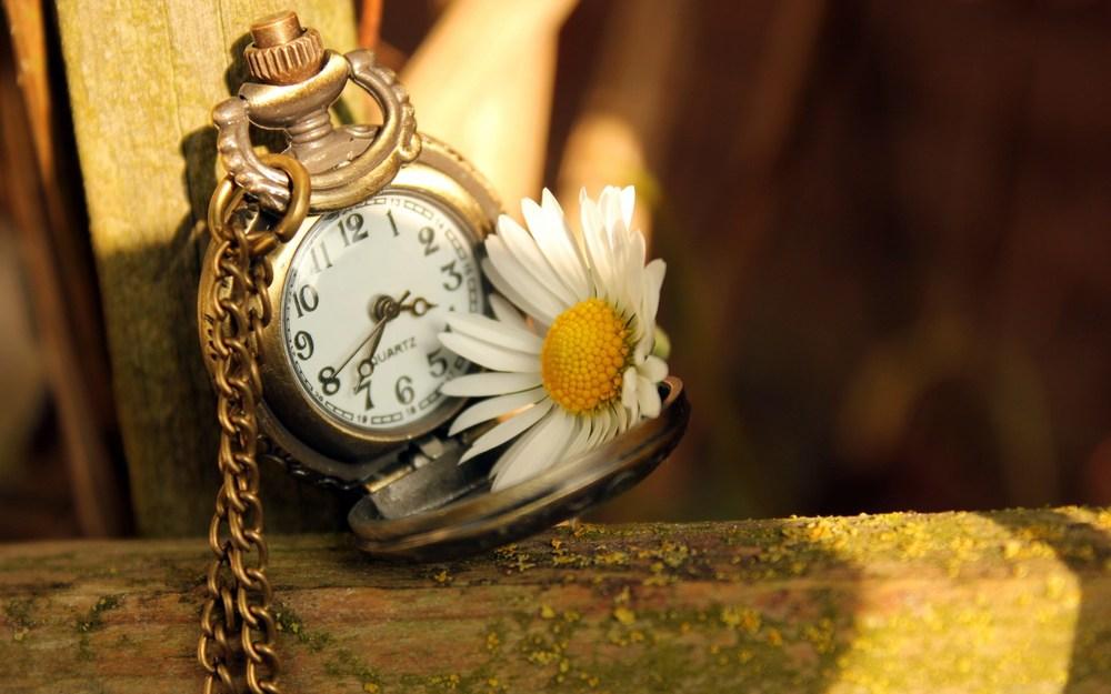 golden-clock-time-sunshine-daisy-white-and-yellow-flower-1680x1050.jpg