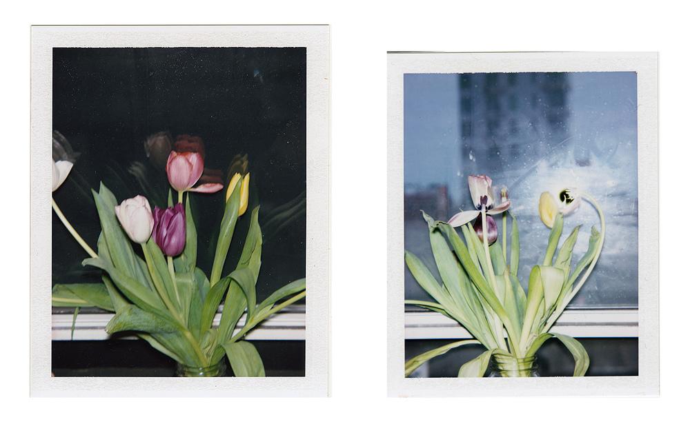 2_flowers_lo_op.jpg