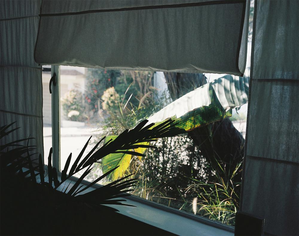 treva_window.jpg