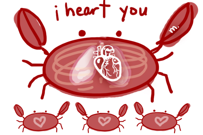 I heart you - crab drawing with anatomical heart
