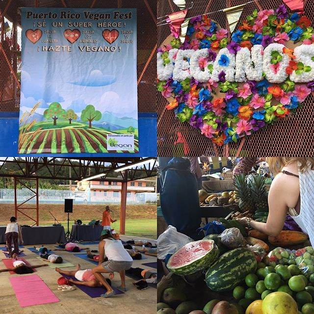 From February 26, 2017: The second annual Puerto Rico #Vegan Festival #puertoricoveganfest2017 in the town of #Fajardo was wonderful! Attendees enjoyed #Yoga, #veganfood, of course, great company, live music! #vivaveganos!