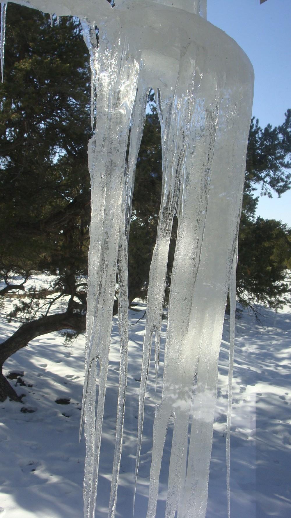 cindy icicle.jpg