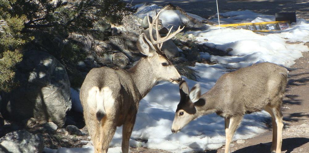 deer crestone