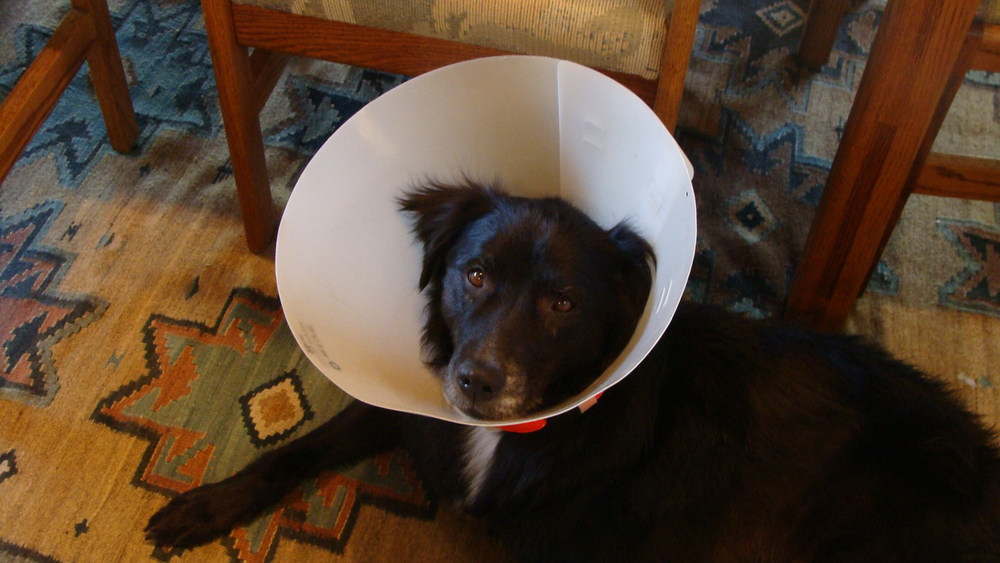 Life in the 'Cone Zone'.