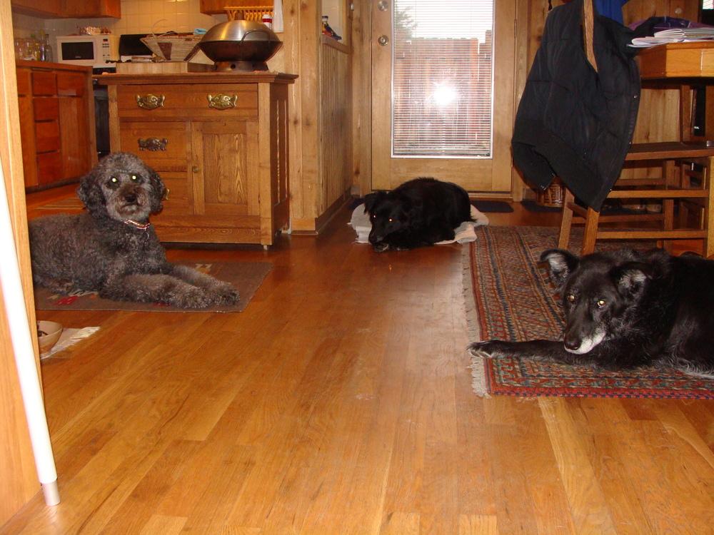 The Canine Family: Bonner, Cool Hand Luke, & Gilley