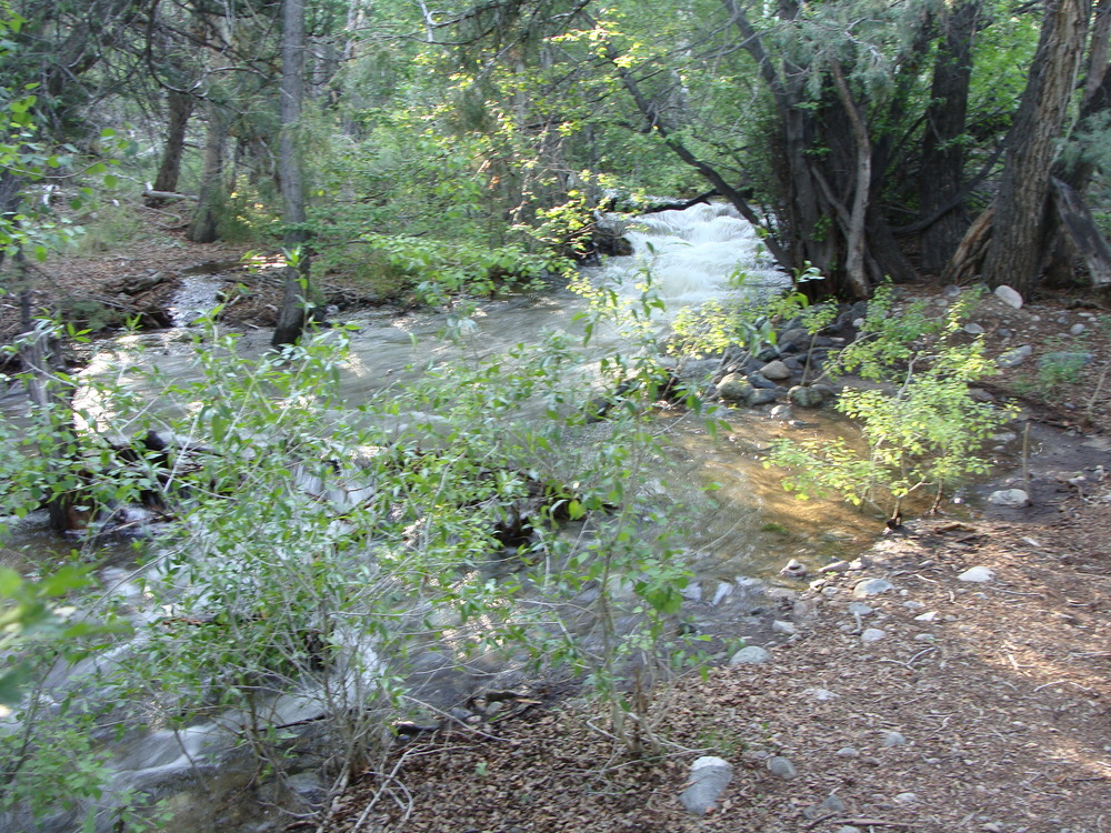 The flow is increasing, Cottonwood Creek widens and the sound of the gentle stream is a roar. That's the energy of Spring and Summer!