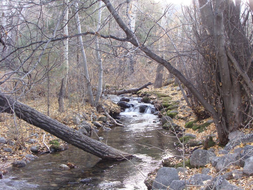 A Favorite Inspirational Spot on Cottonwood Creek