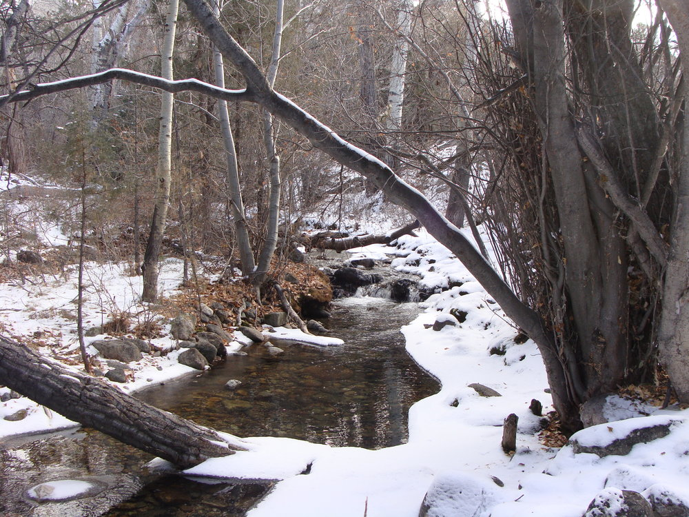 Our favorite spot on Cottonwood Creek is putting on its winter cloak.