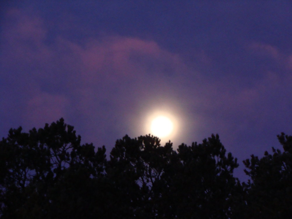 Magical, Mystical Moon at Sunrise