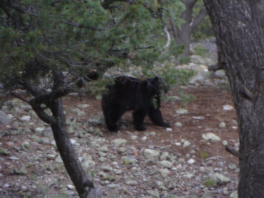 Bear: Awakening the Power of the Unconscious (Ted Andrews,  Animal-Speak )