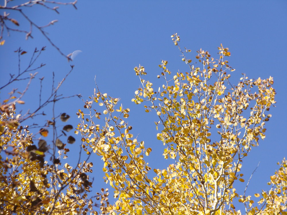 Moon, Blue Sky, and Leaves Ready to Fall