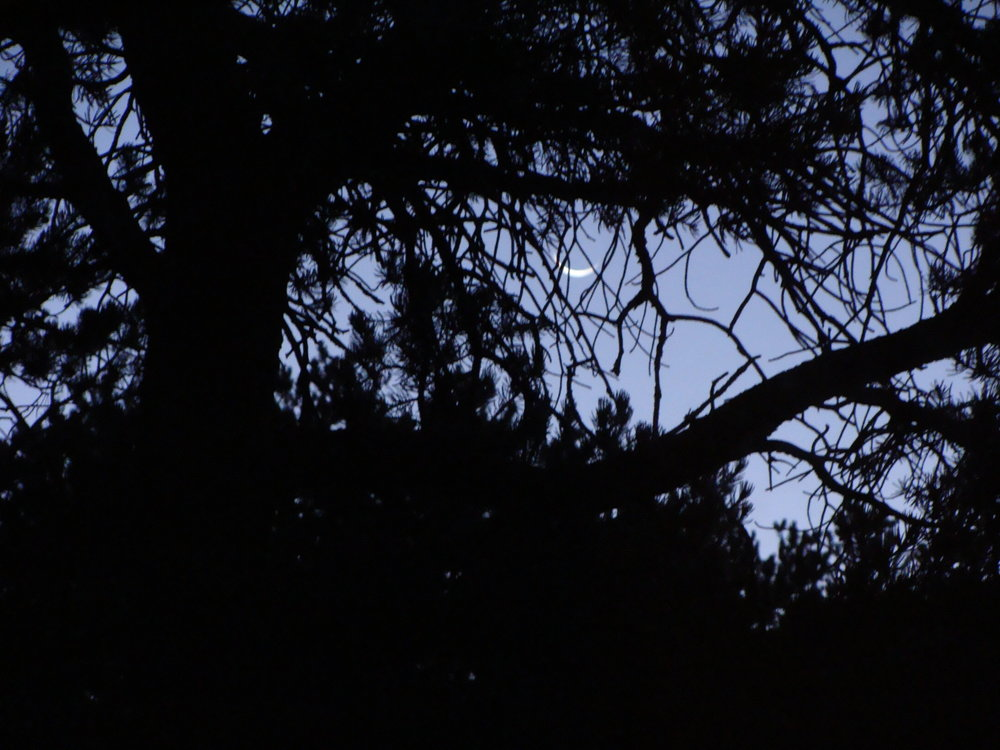 Morning Crescent Moon - Receptivity Peeks Through The Trees