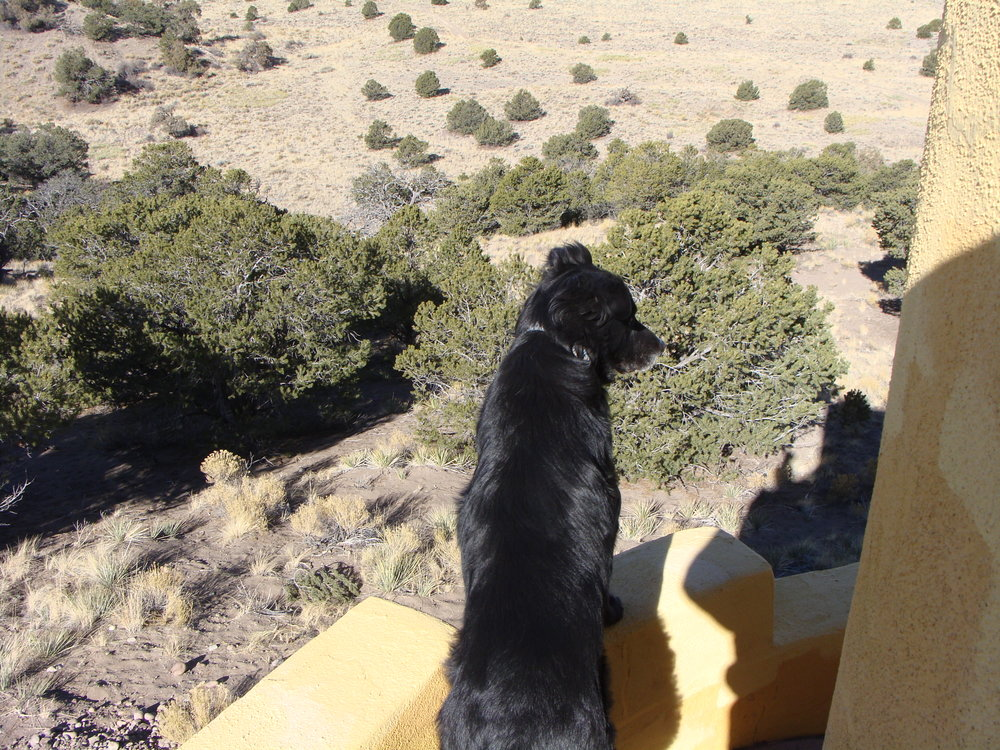 Cool Hand Luke takes a look at the landscape from the Zigurat