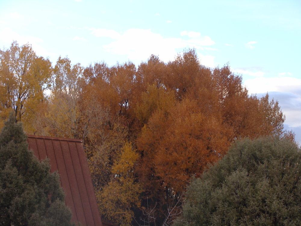 Autumn Fades …