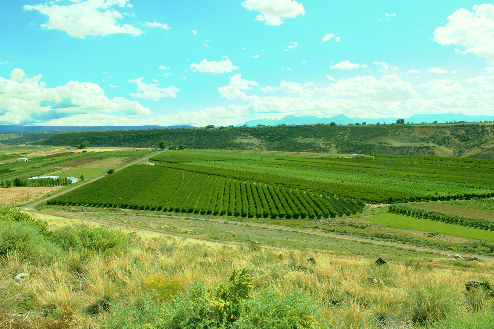 The view from up the hill overlooking Fritchman Orchards.