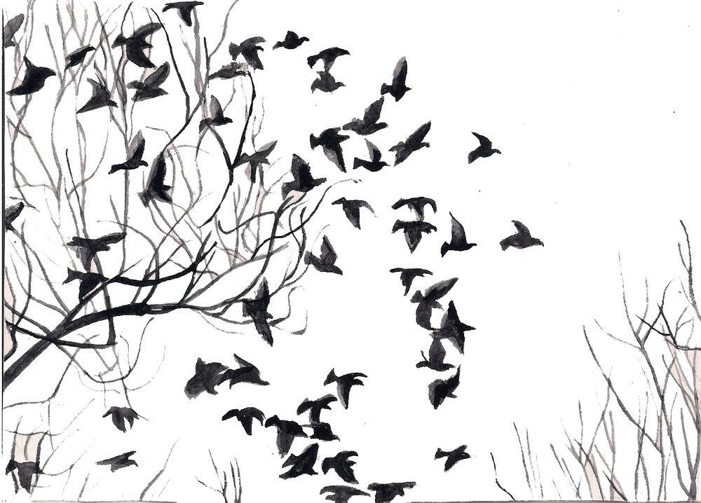 bird-flock.jpg