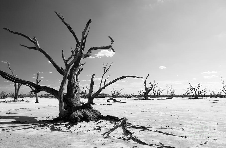 climate-change-black-and-white-tim-hester.jpg