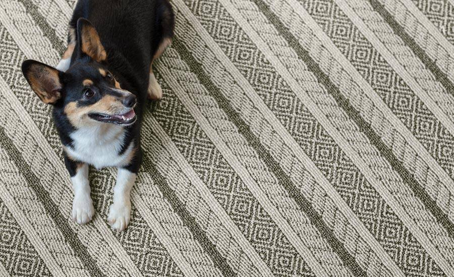 """Introducing """"Unleashed"""" - A yarn system that originated from a commercial solution-dyed carpet goes residential with Anderson-Tuftex new series """"Unleashed"""". Featuring never before seen patterns in a Stainmaster Pet Protect carpeting.For samples call or visit our Showroom."""