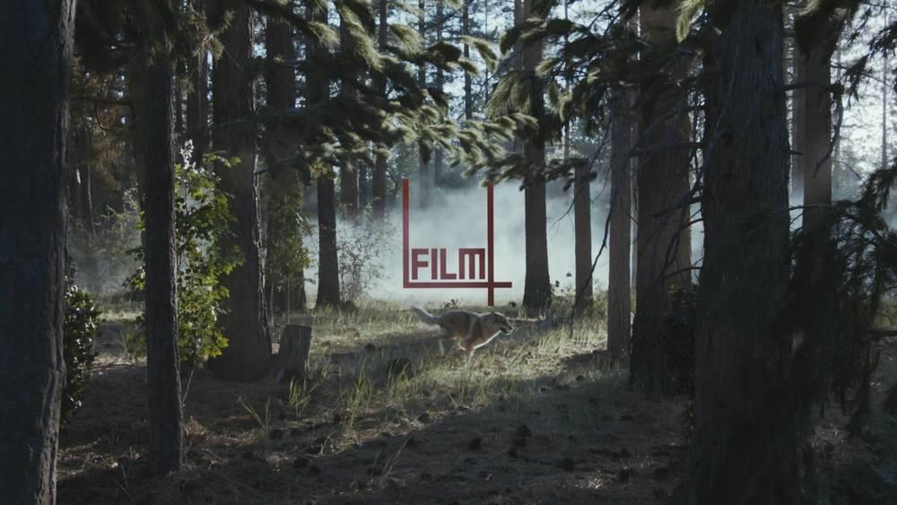 woods_wolves_800_2x.jpg