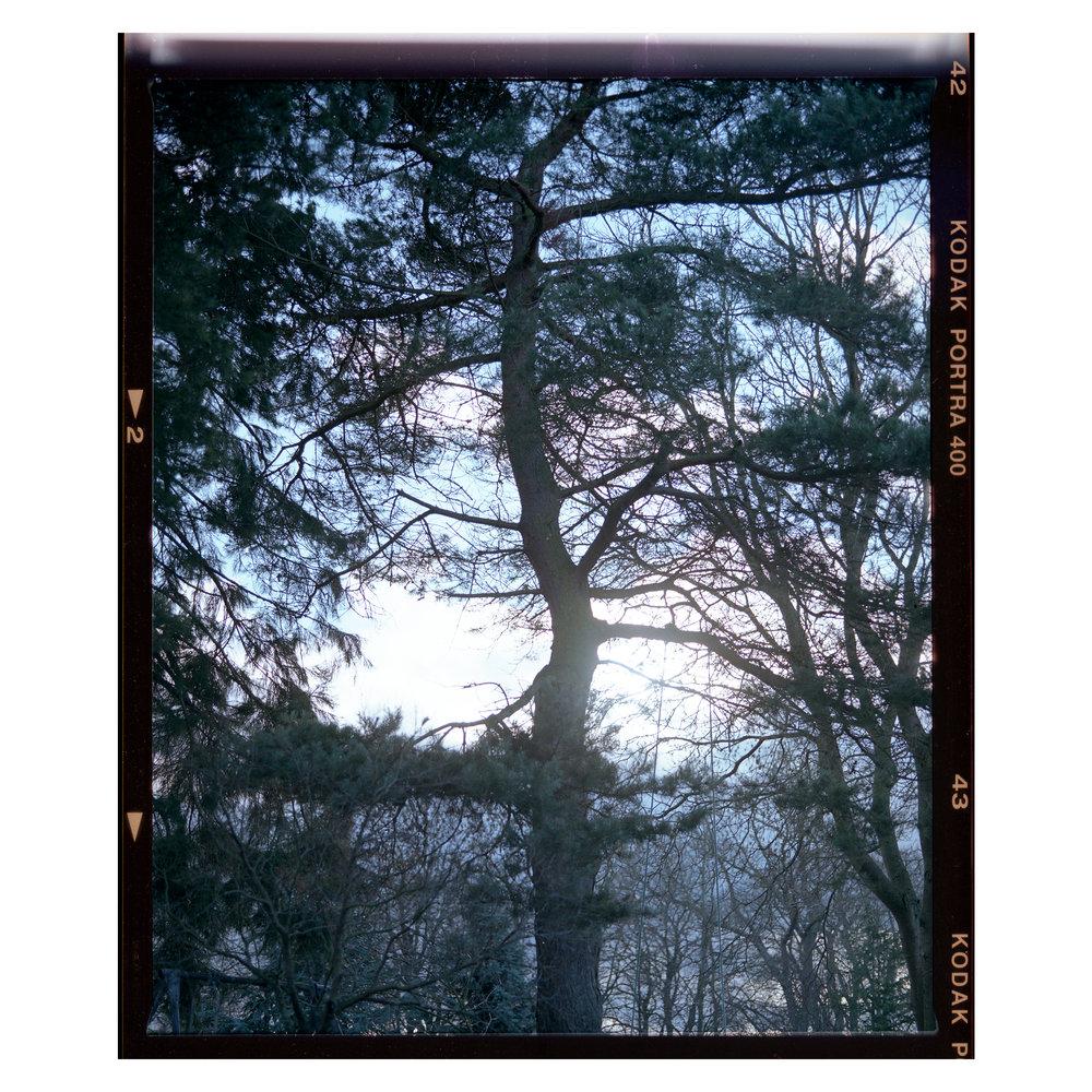 TreeDar.jpg