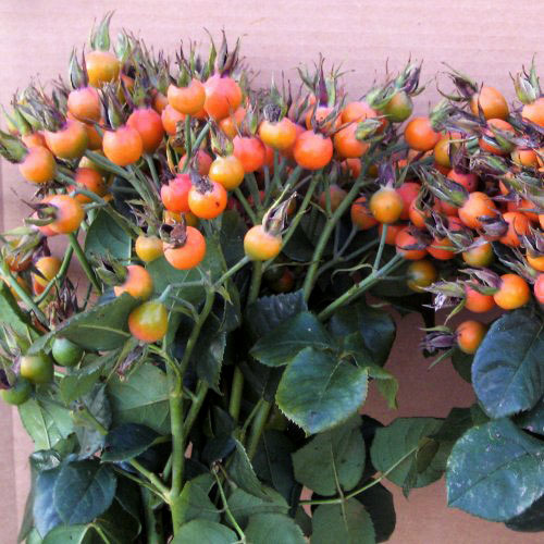 Rosehips Pumpkin