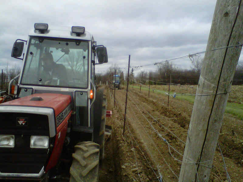 Deep ripping and cultivating is the first step to prepare for winterizing the vines.
