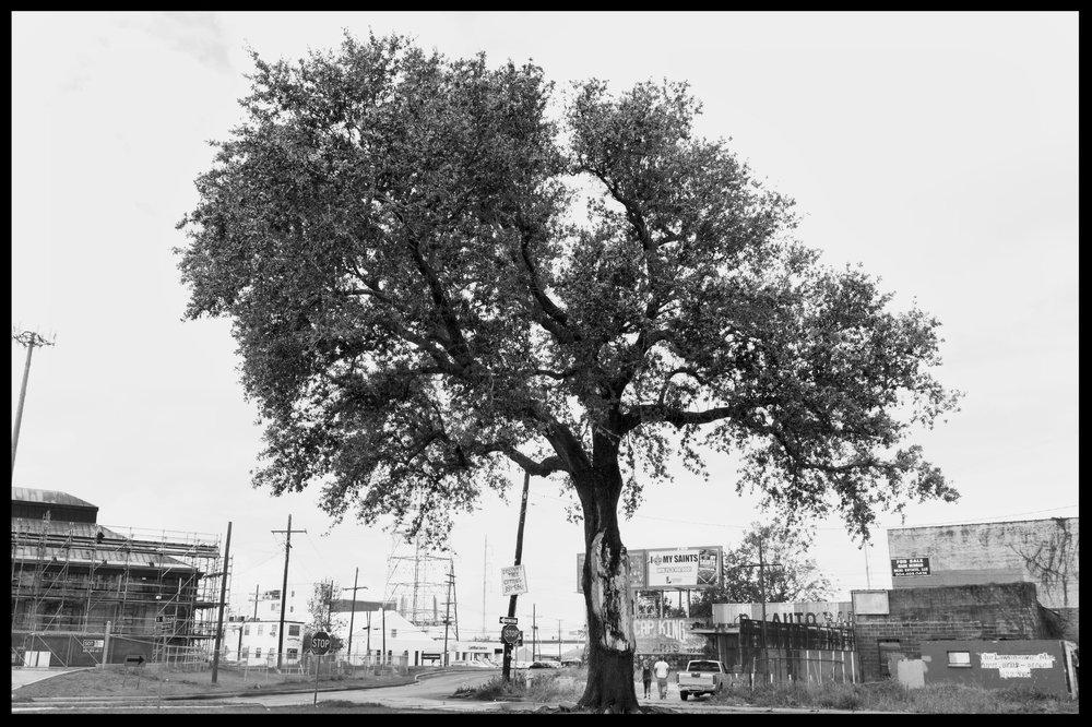 hub cap tree .jpg