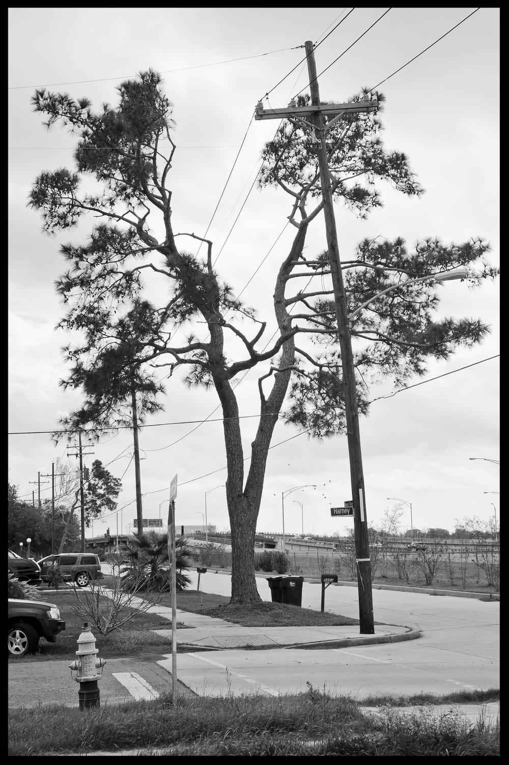 split tree.jpg
