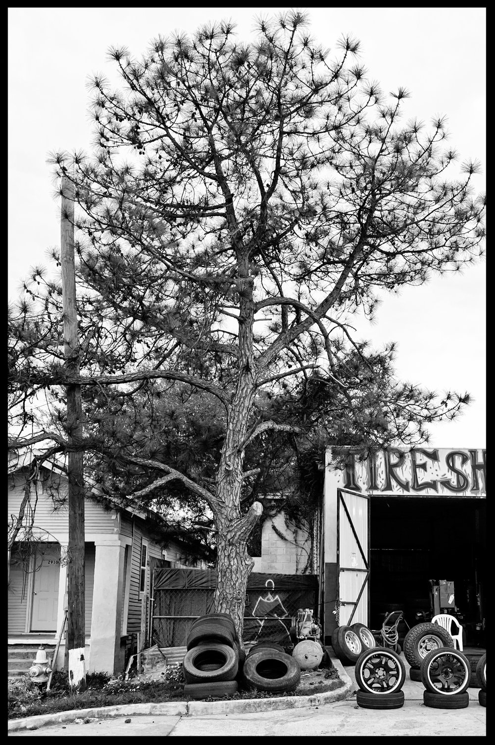 tire tree.jpg