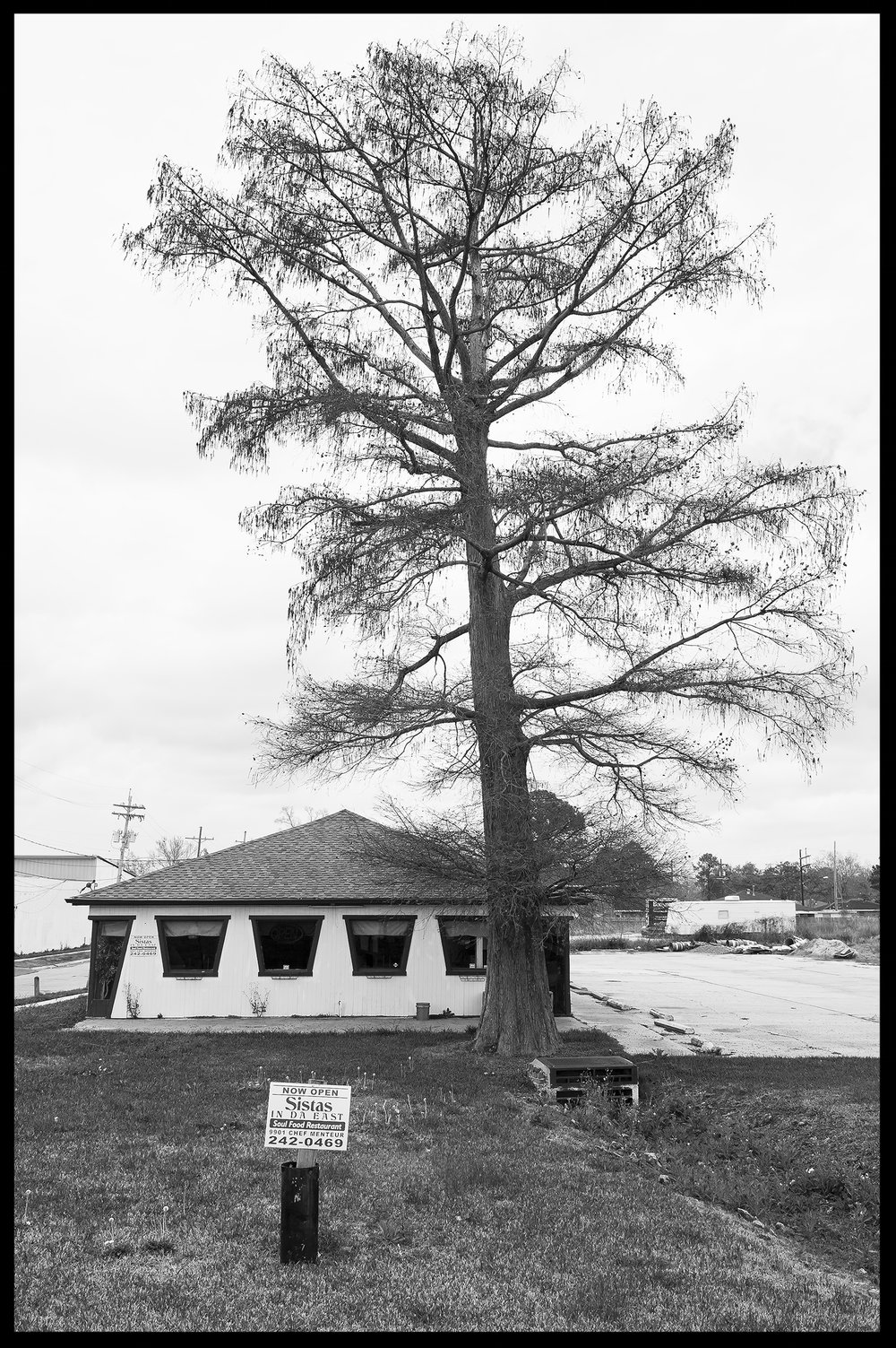 sistas tree.jpg