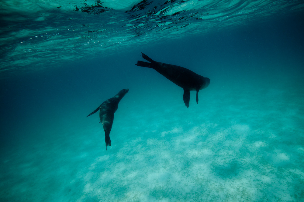 006-FP-Sea Shepherd-GLP-121118.jpg