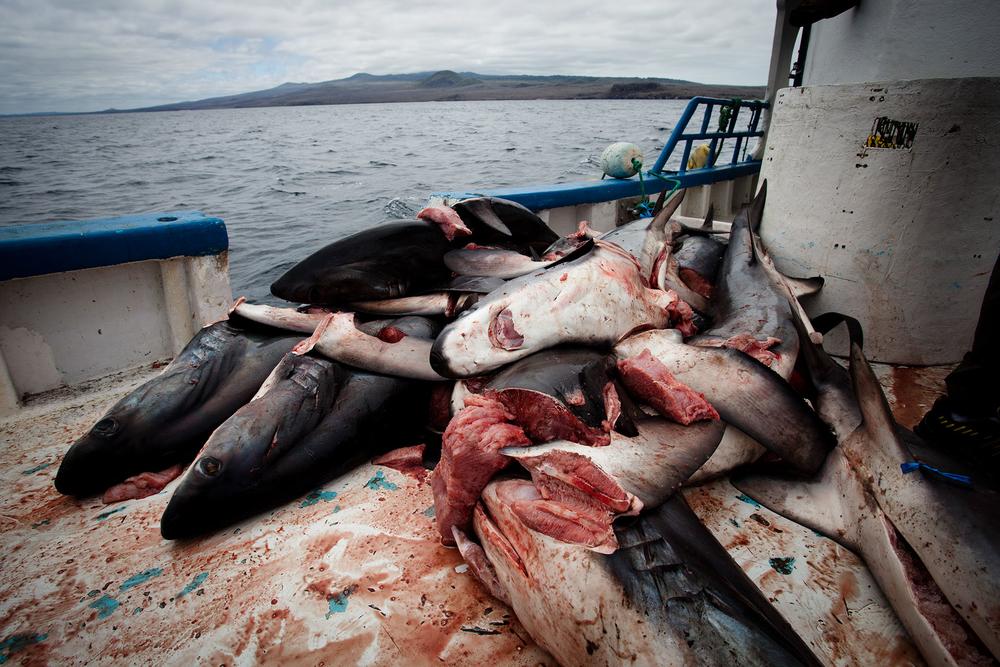 022-FP-Sea Shepherd-GLP-121118.jpg