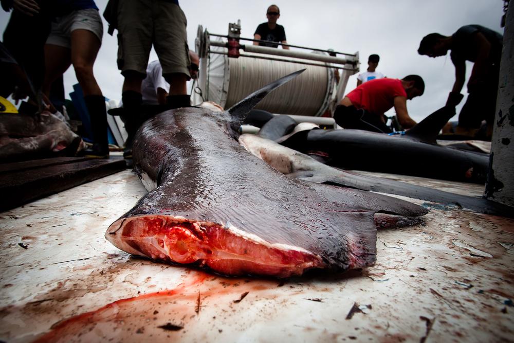 025-FP-Sea Shepherd-GLP-121118.jpg