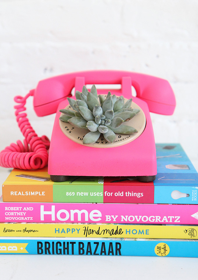 Rotary phone succulent planter.