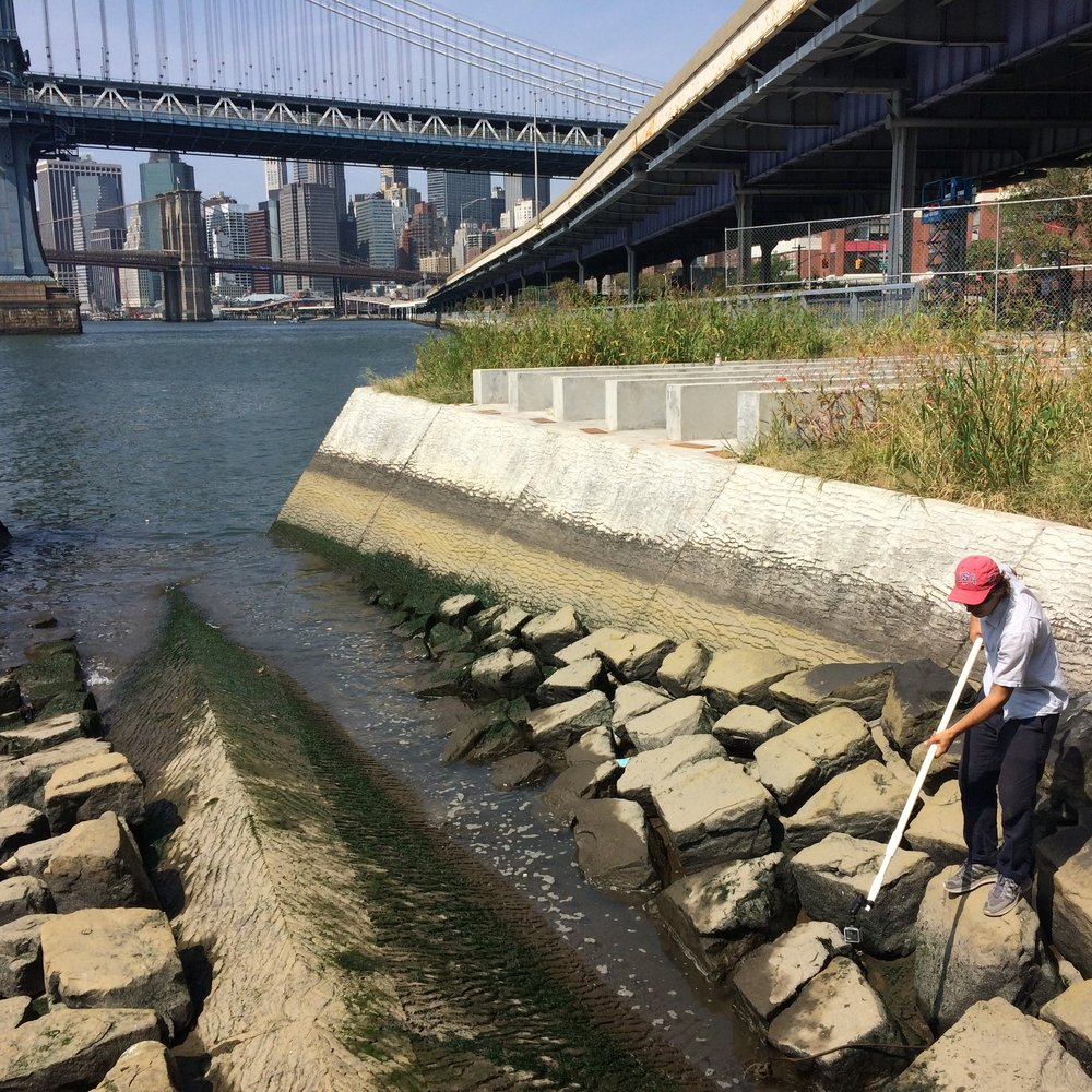 East River Shellfish Monitoring