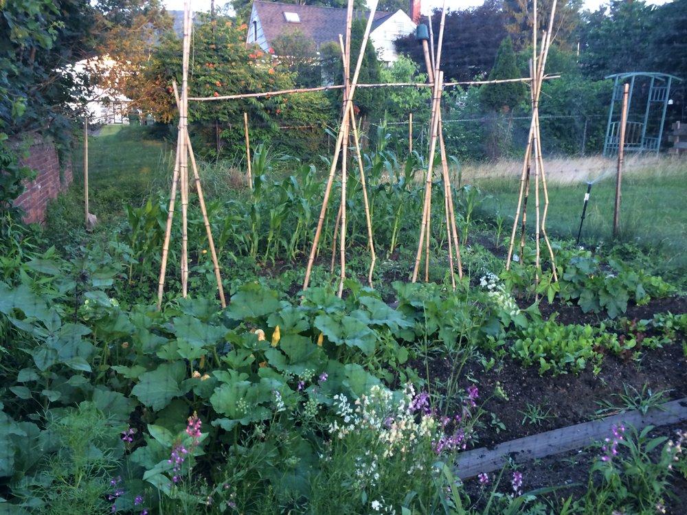 2013 Vegetable Garden (August)