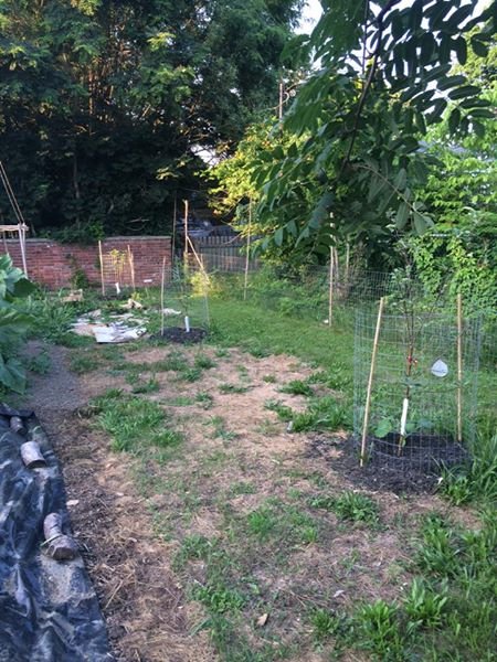 2016 - Dwarf fruit trees