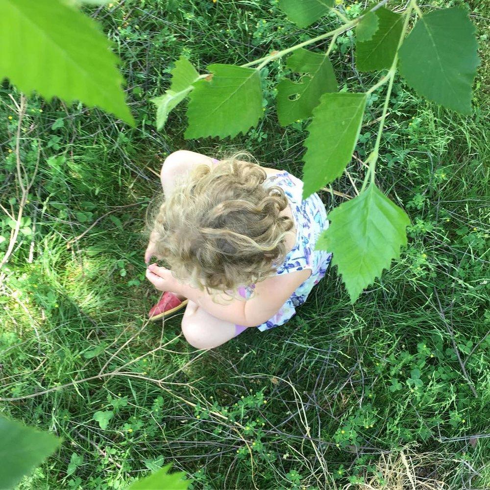 2018 - Lawn Nest