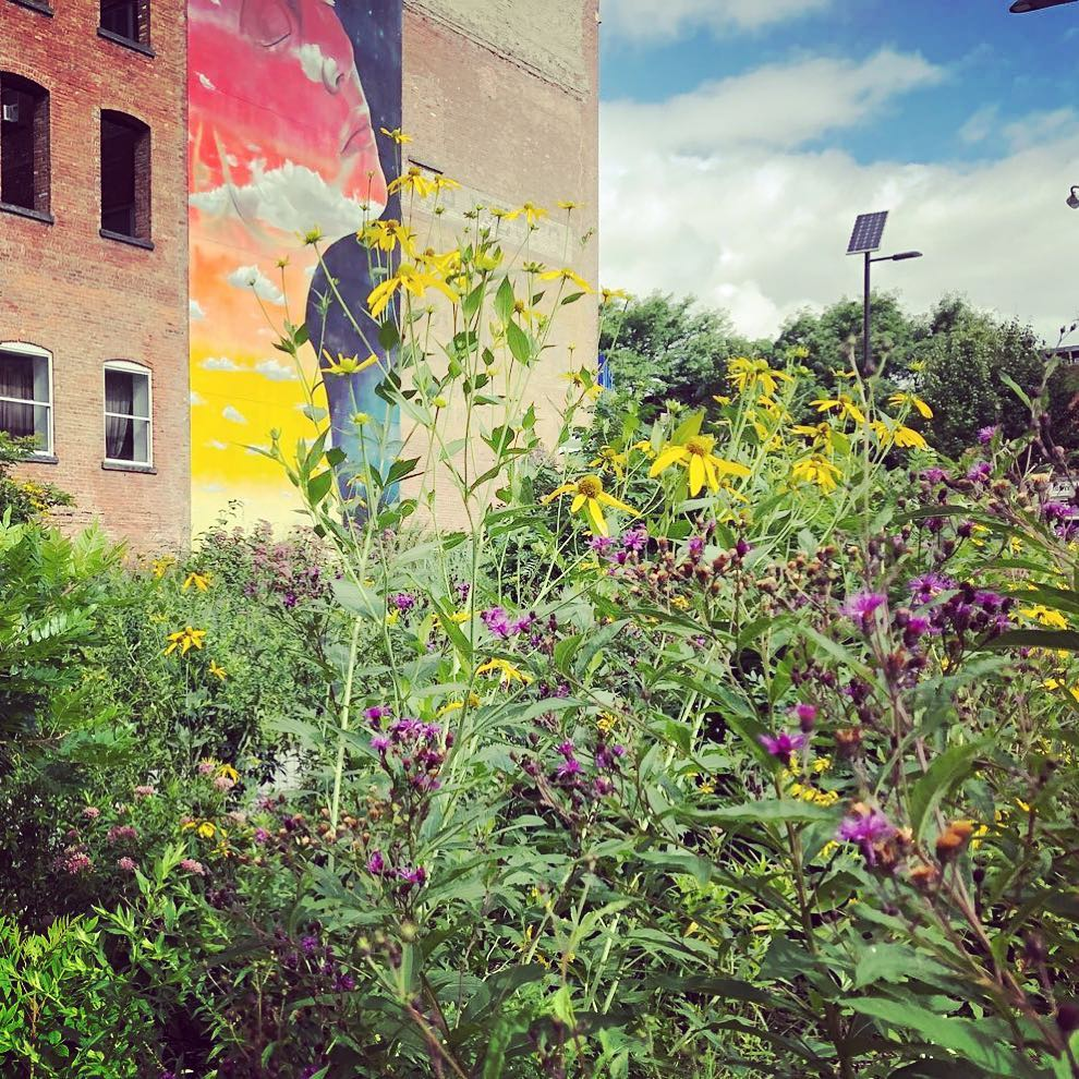 Yellow coneflowers and New England asters pop in front of stunning Newburgh mural