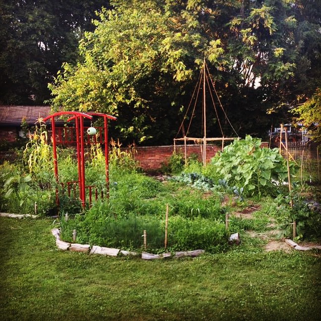 Vegetable garden in peak growing season