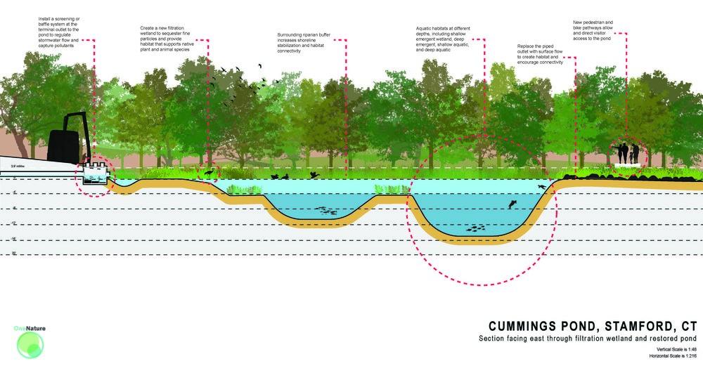 cummings pond section labelled Rv2.jpg