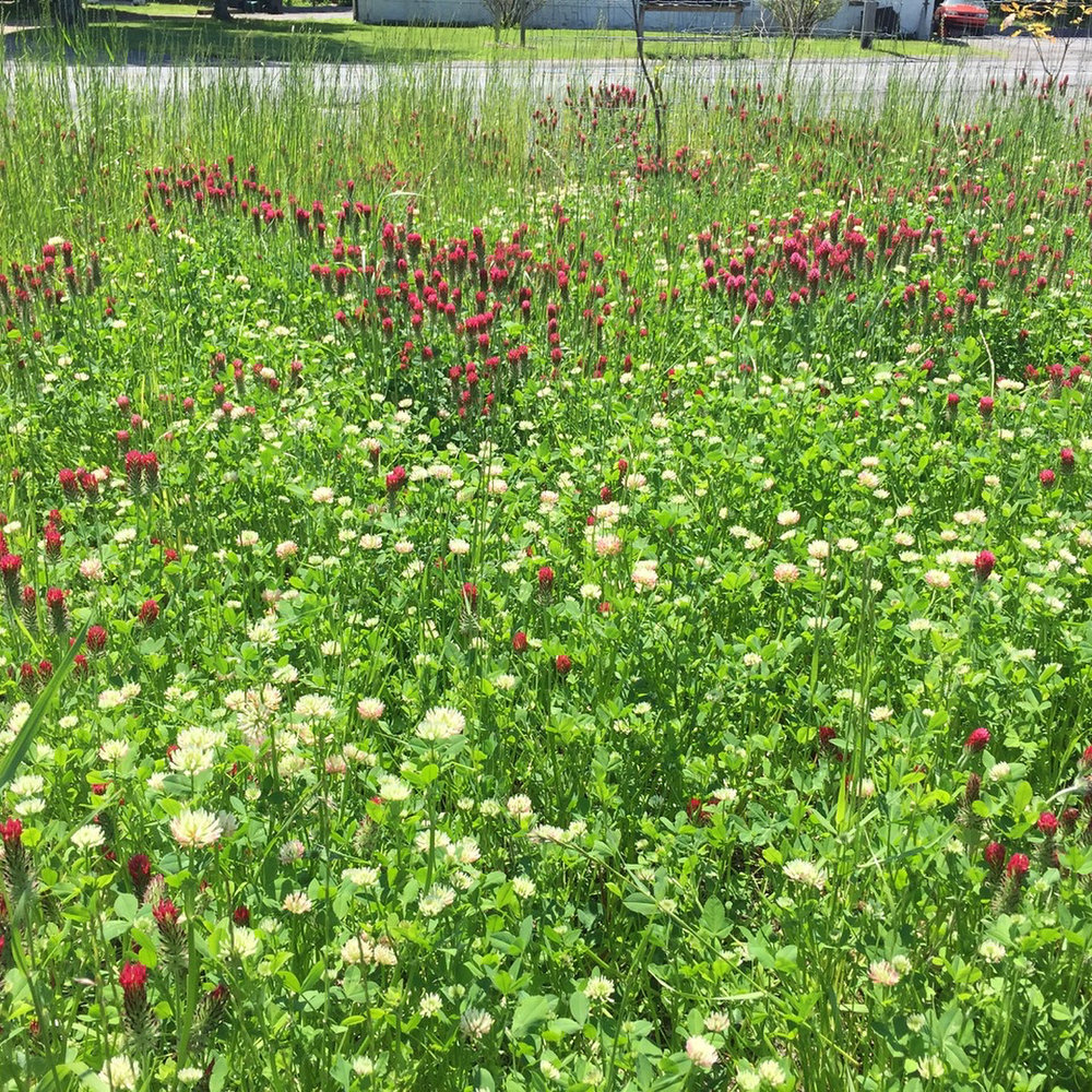 A former gravel lot restored to a native wildflower meadow