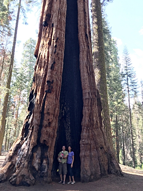 Many of the Sequoia trees we saw during our visit to Sequoia National Park wore wounds from past fires they'd survived. The bark on these trees is an effective fire retardant and the scars left on these incredible trees following a forest fire slowly heal over time.