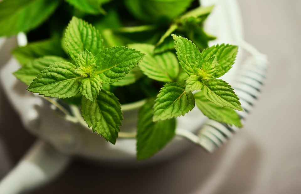 Peppermint is one of the most popular herbs used to make tea.