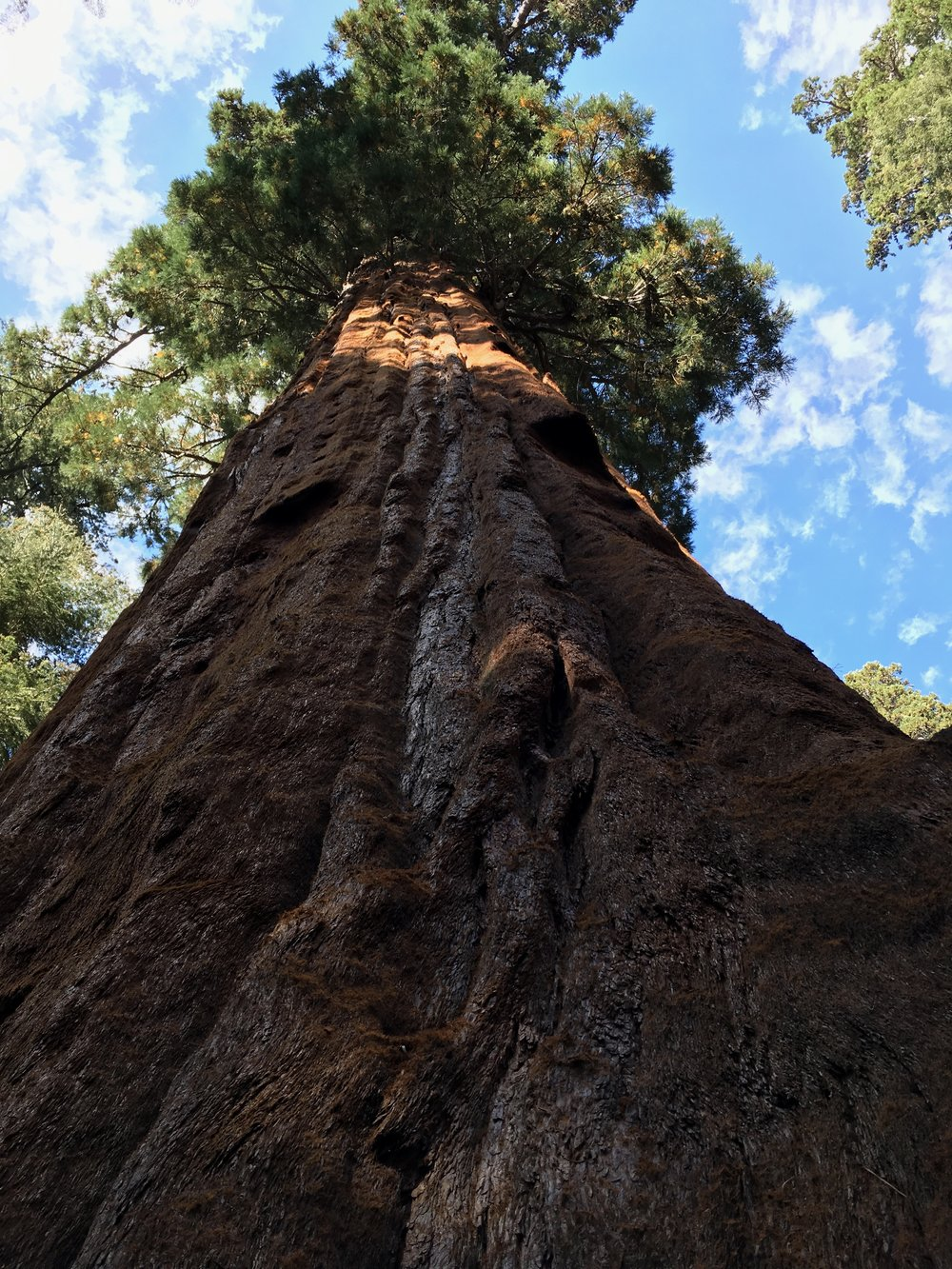 Just as trees grow upward toward the sky, in the body the Wood energy, or Qi, of the Liver also ascends. (From our trip to Sequoia National Park, 2017)