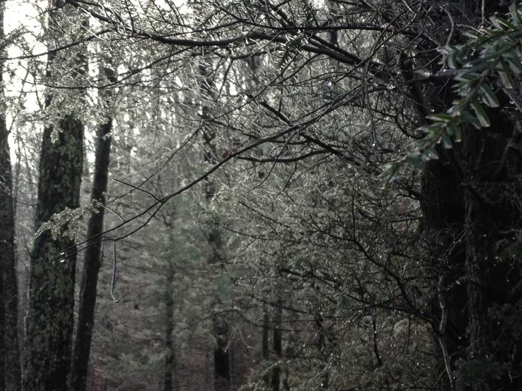 Freezing rain clinging to trees on Hannah Mountain Trail this a.m.