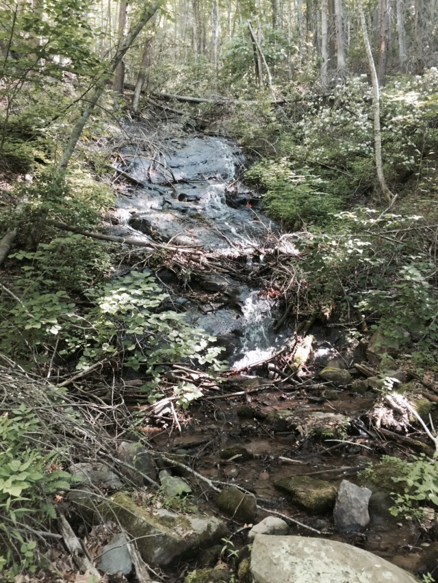 One of many cascades along the trail today